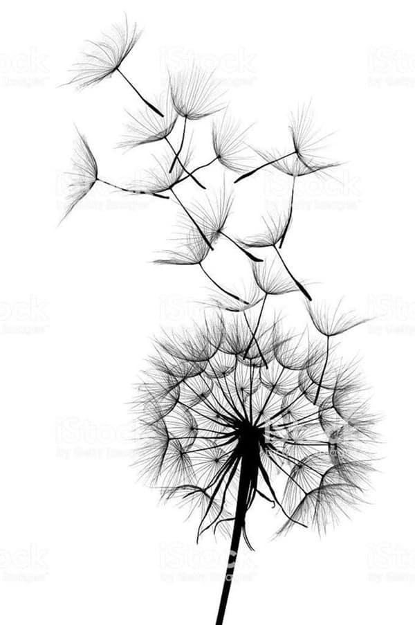 bản vẽ hoa bồ công anh