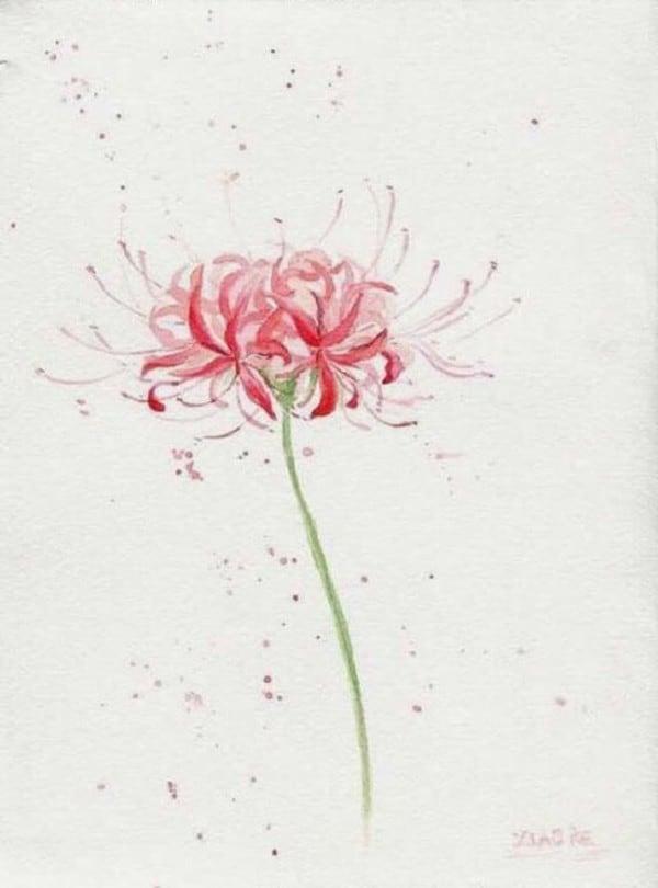 hình xăm bông hoa bỉ ngạn