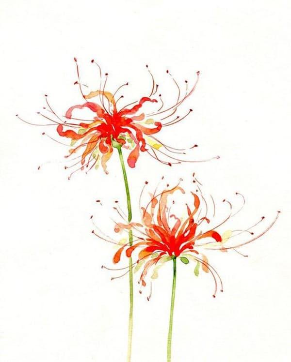 hình xăm mini hoa bỉ ngạn đẹp