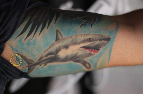 hình xăm cá mập ở cánh tay đầy nghệ thuật mang lại thẩm mỹ và may mắn cho các bạn nam sinh năm 1988